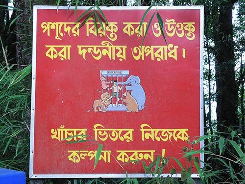 bengalu-kalba